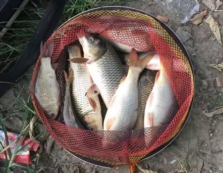 夜钓出发,遇到鲤鱼群 钓鱼之家饵料钓鲫鱼