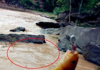 秋季江河钓鱼饵料的重要性