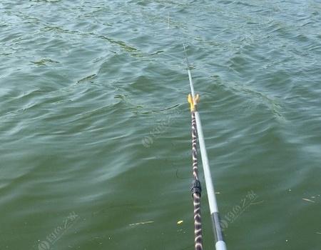 上午顶阳作案,下午顶风作案 老鬼饵料钓草鱼