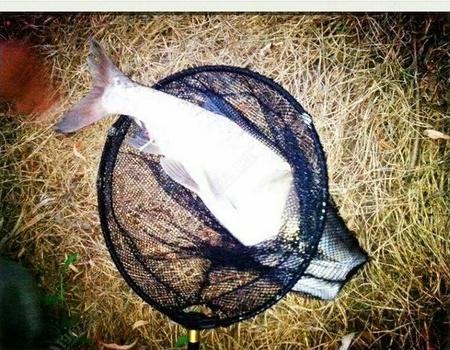 某水庫路亞夜釣 擒獲鰱鳙、翹嘴、黃穎魚