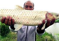 《钩尖江湖》第2季第15期 小崔改变钓法,草鱼继续连竿