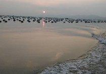 诏安湾海钓场