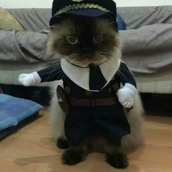 贝克街的猫丶