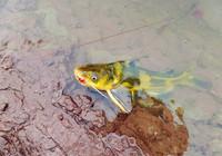 黄颡鱼秋季最佳垂钓时间与用饵