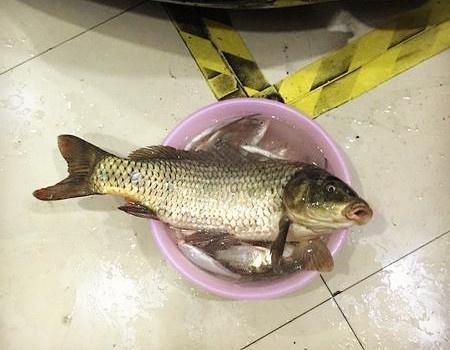 1.0线战起6.2斤野生鲤鱼,爽翻了! 钓鱼之家饵料钓鳊鱼