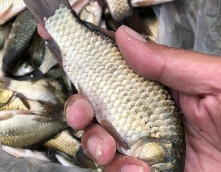 初秋季節大石河畔練鯽魚,說說你釣過的奇葩