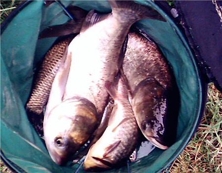 秋季釣鰱鳙這5點很管用