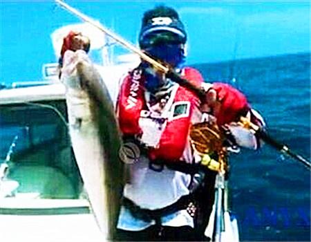 海钓归来,黄鳍金枪生鱼片