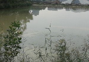 宝湖垂钓池