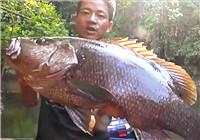 《路亚钓鱼快乐8彩票》 男子热带雨林钓大鱼