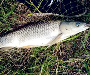 秋季钓鱼装备及饵料的选择