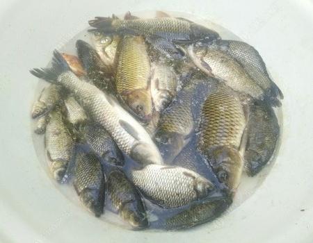 一葉知秋之國慶的正確打開方式 自制餌料釣草魚