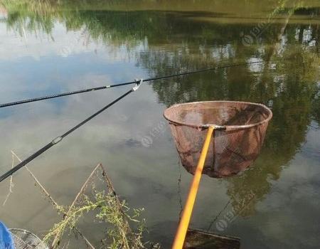 许久未钓鱼了,今天请假去解毒 蚯蚓饵料钓鳊鱼