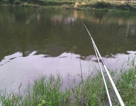 一个国庆就这点鱼获身心疲惫 自制饵料钓鲤鱼