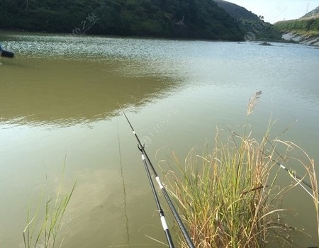 人生有起落不可能一帆風順 蚯蚓餌料釣鰱鳙魚