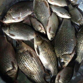 渔瘾无可救药