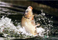 这八种因素会让你在钓鱼过程中跑鱼
