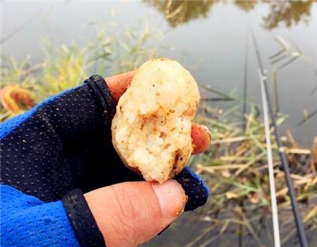 冷了,完美收杆 自制饵料钓鲤鱼