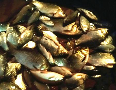 冶湖旁小沟垂钓 蚯蚓饵料钓黄颡鱼