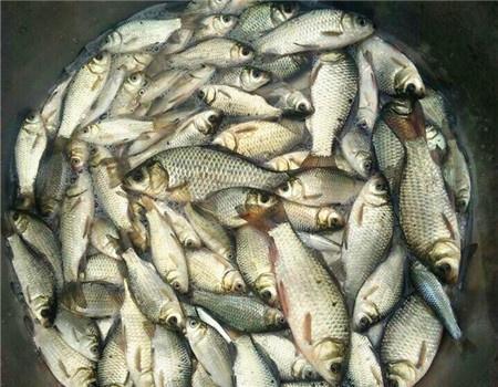 秋冬钓鱼常用的调漂技巧 自制饵料钓鲢鳙鱼