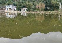 绥阳窑上鱼塘