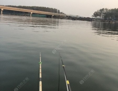 潮白河胜利归来…… 红虫饵料钓鲤鱼