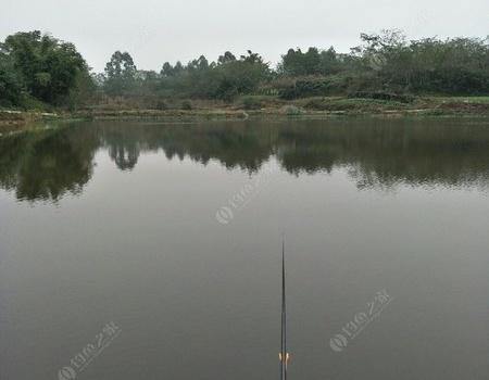 計劃很久的板鯽之行 化氏餌料釣鯽魚