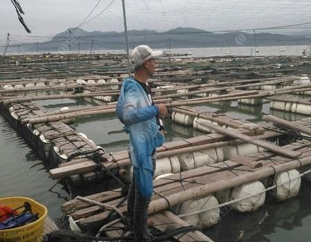 今天来鱼排钓鲈鱼,收货不错。