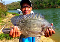 钓友多年钓罗非鱼后的经验与技巧分享