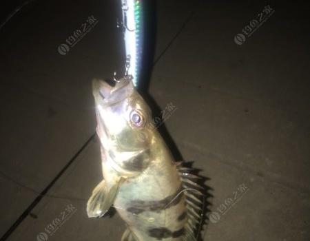 路亚浏阳河 拟饵钓鳜鱼