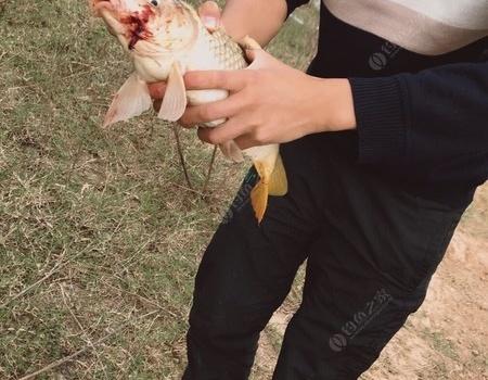 东河与莲花湖之行 老鬼饵料钓鲤鱼