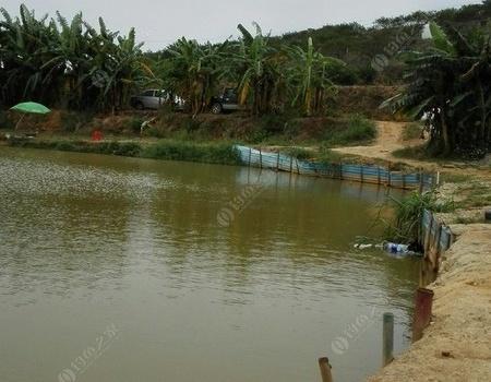 坑塘也能玩出野釣的趕腳