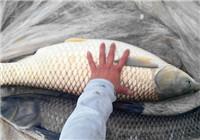 资深钓友分享冬钓草鱼饵料配方与钓法技巧