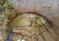 山塘中野钓大体型鱼所需技巧