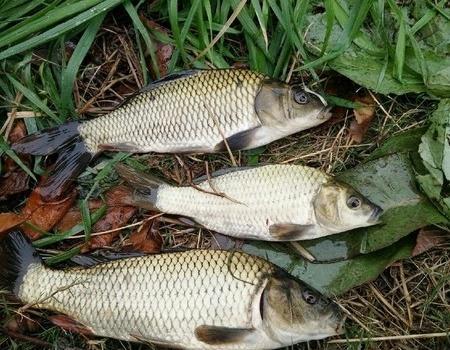 雨中,就我一个人傻傻的在钓鱼 红虫饵料钓鲤鱼
