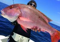 釣魚圖片 細數那些釣到的比人還大的魚