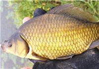 釣友必看的淡水魚6個習性