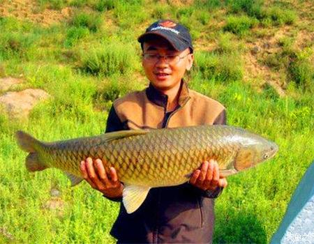 教你初冬在江河遇刮风天如何垂钓草青鲮鱼