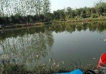 桂花城钓场