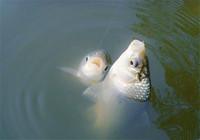浅谈冬天钓鱼的5个实用技巧
