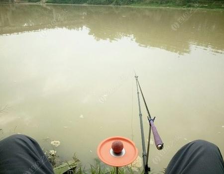 浑水钓鱼,钓到怕,诅咒沙场老板。 钓鱼王饵料钓鲶鱼