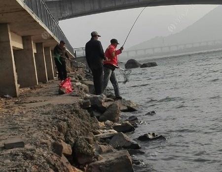 好久没好久没冒泡了。 钓鱼之家饵料钓罗非鱼