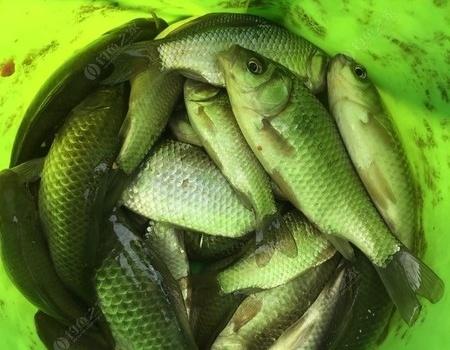 邂逅絕對的野河,一個美好的下午時光..... 釣魚之家餌料釣鯽魚