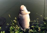 冬季野钓小鲫鱼需要具备的技巧