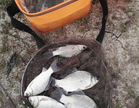 洞庭湖建新九队队长的鱼获 龙王恨饵料钓鳊鱼