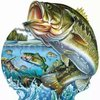 怕鱼多多多