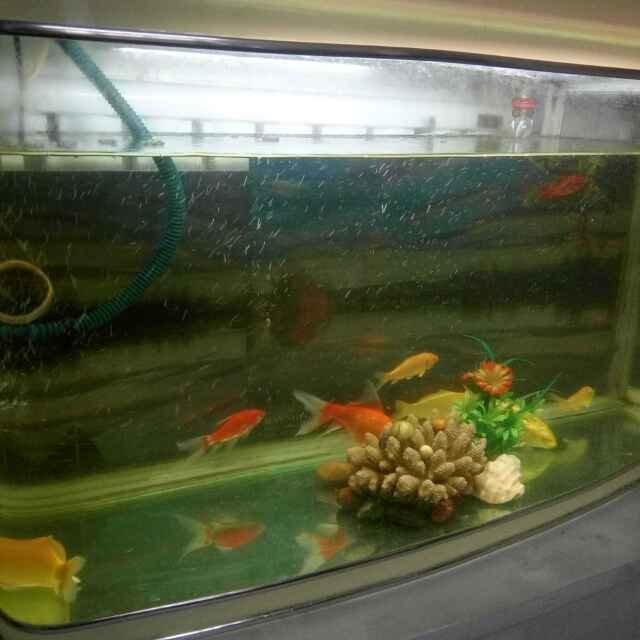 我有一只鳄龟要卖