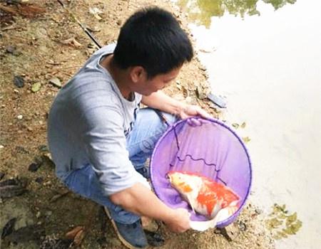 钓者,渔与鱼也 自制饵料钓罗非鱼