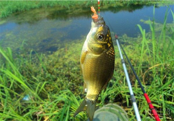 鱼的生活习性