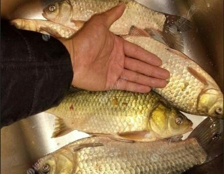 今天冬至,鲁湖垂钓中心附近的水港、小水面探钓 天元饵料钓鲫鱼